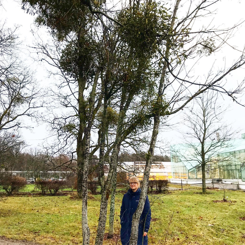 Bild på Maja i Bergianska trädgården