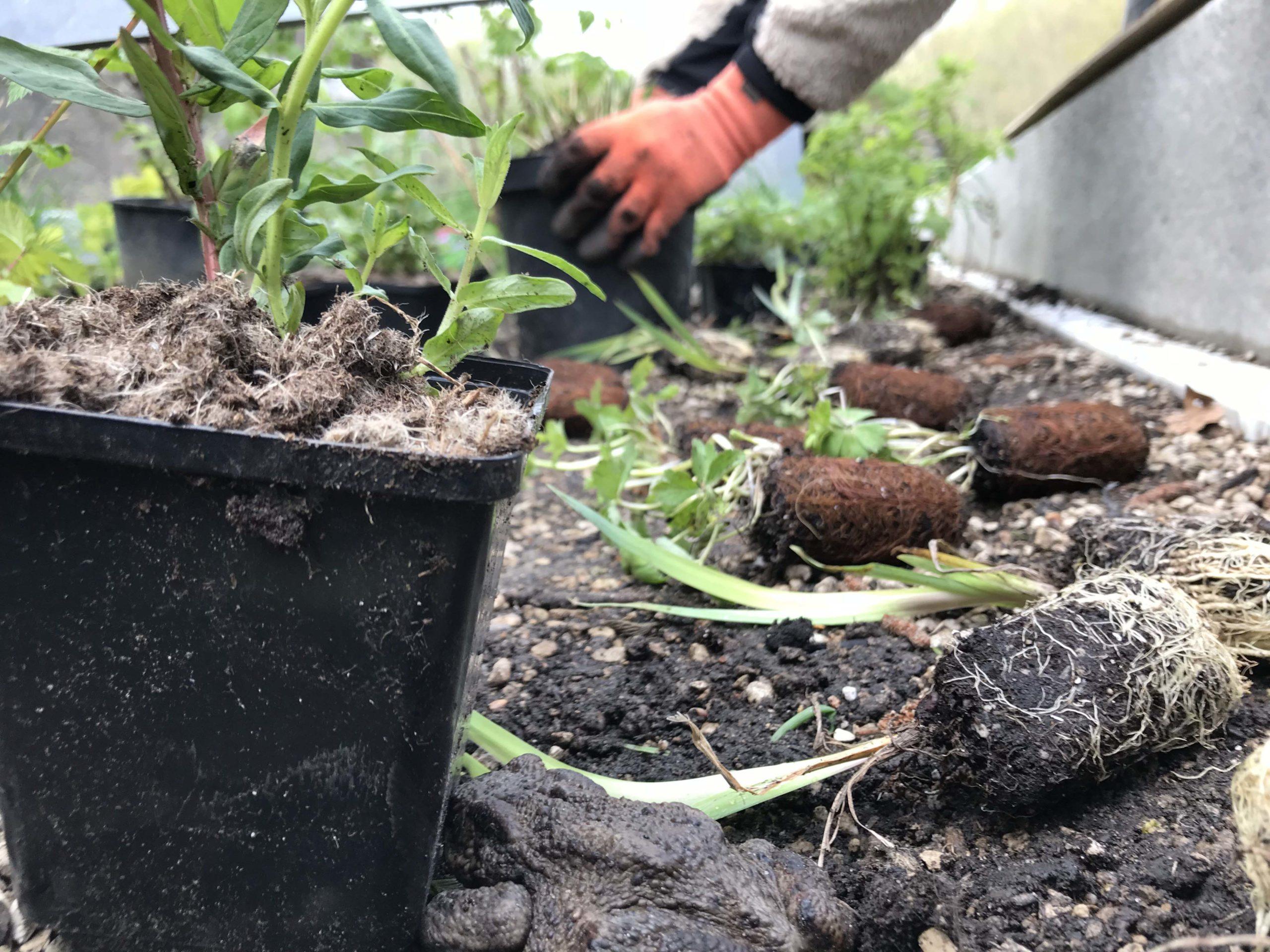 Plantering under gallerdurk