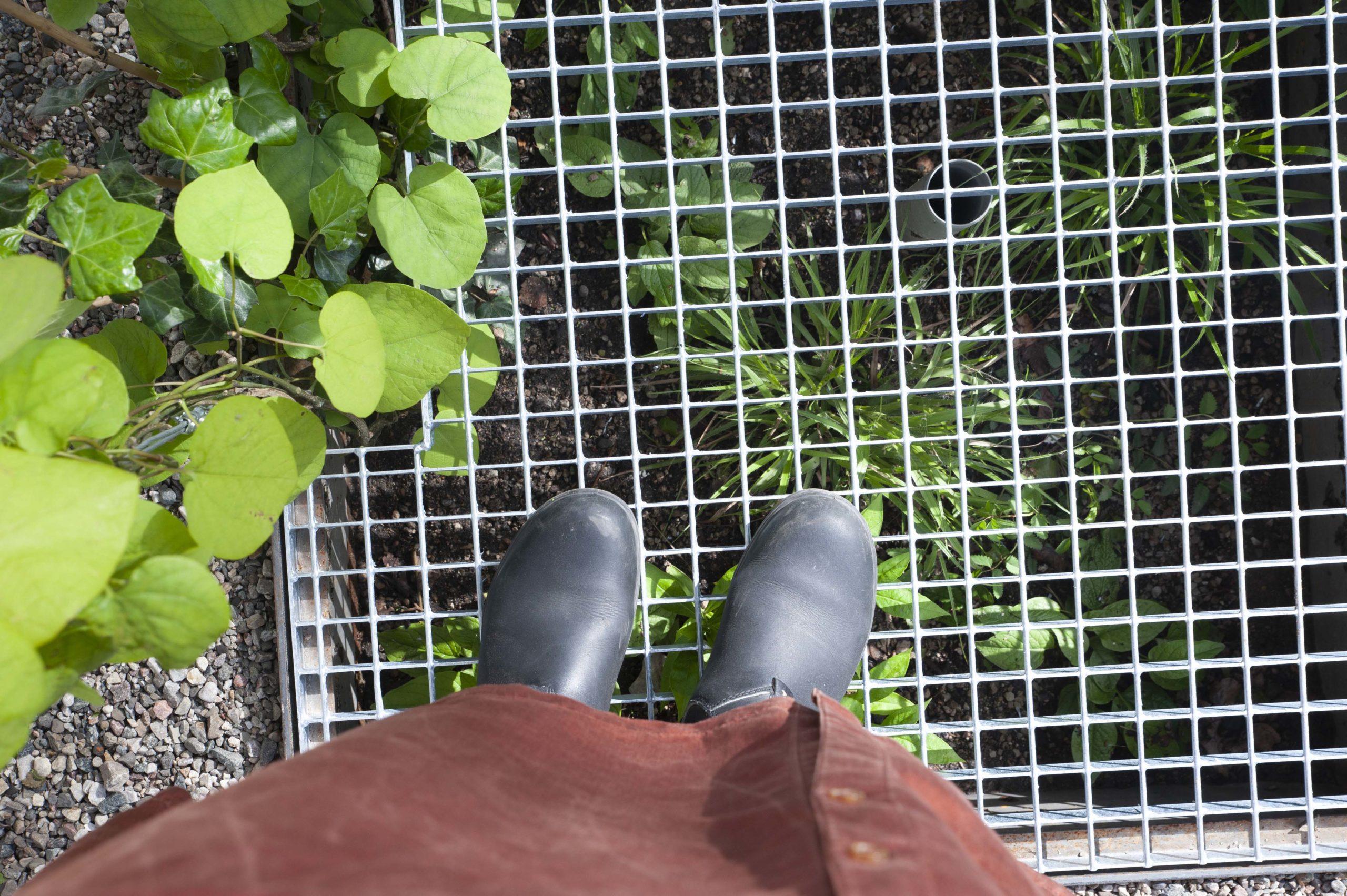 Urban Layers, Klätterväxter och undervegetation i skydd av gallerdurk