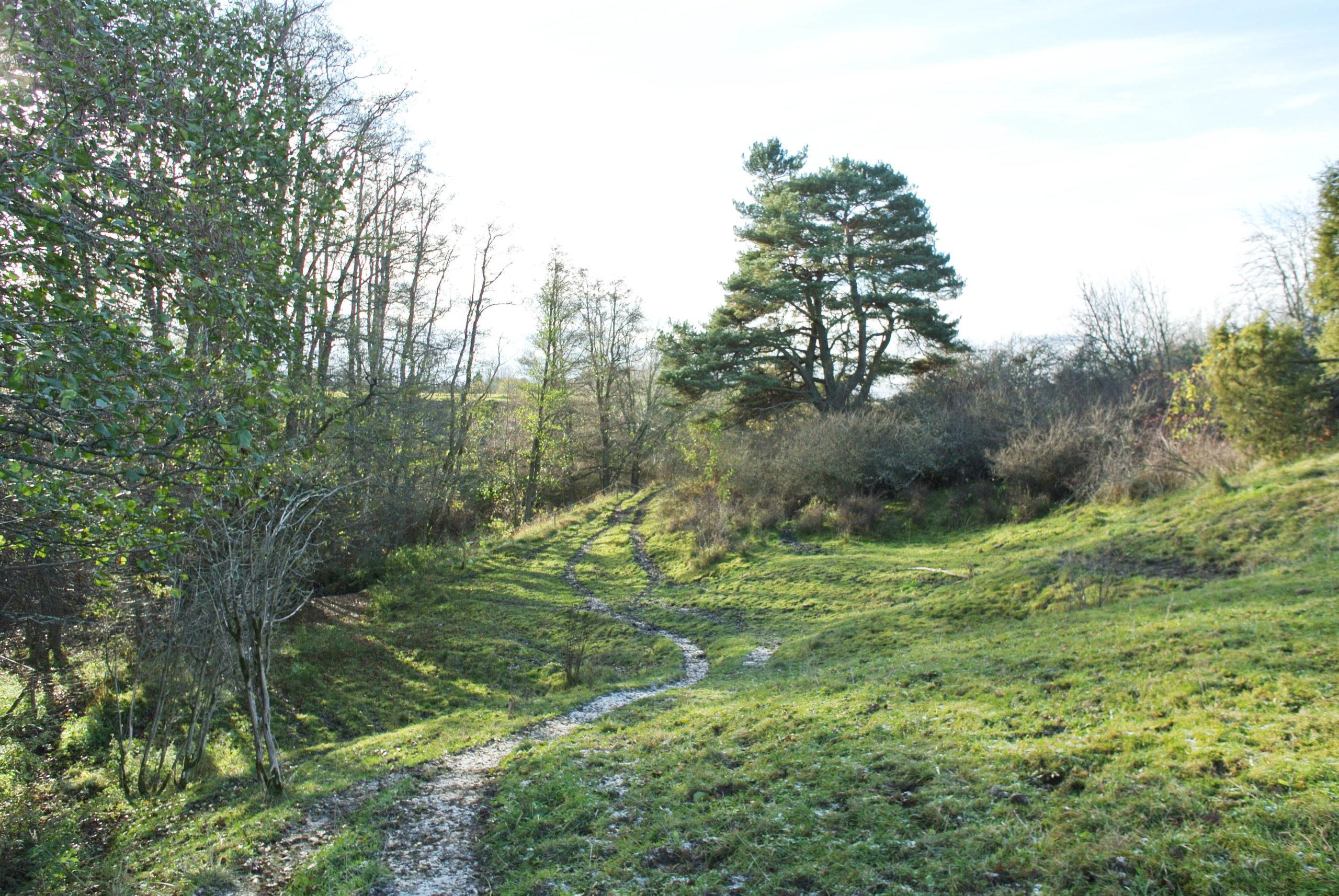Betesmark med slån